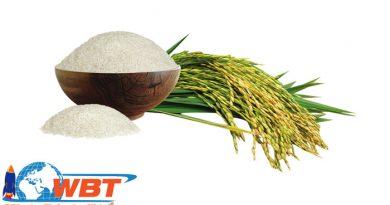 Thiết kế website bán gạo
